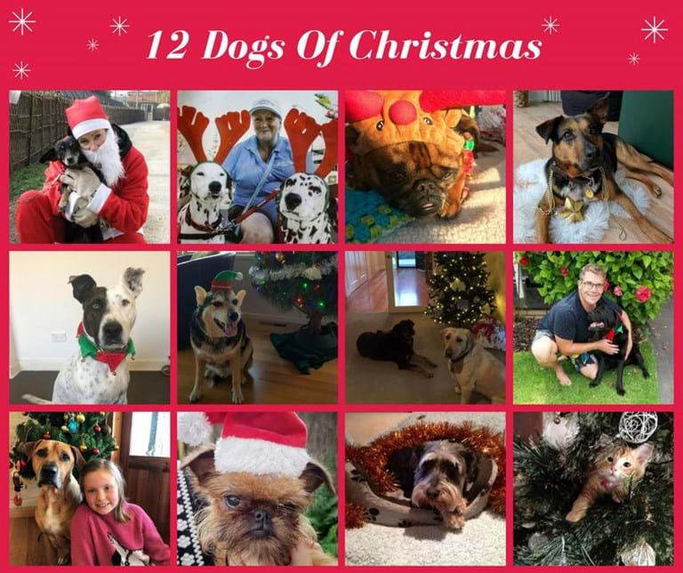 12 Dogs Of Christmas.12 Dogs Of Christmas